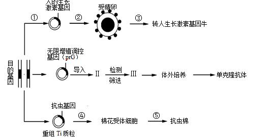 花粉管通道法的原理_花粉管通道法图片